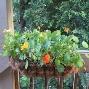 Flower on the balcony attract birds!
